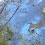 pond image, Ojai, CA