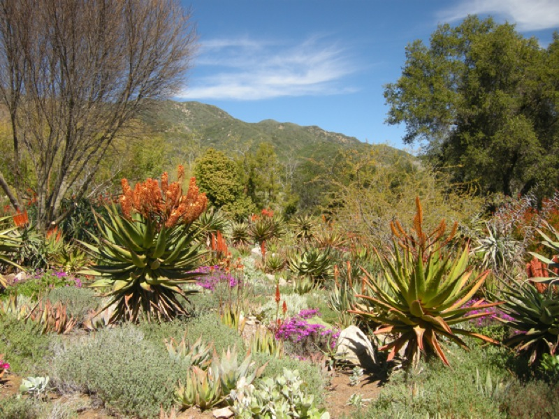 Ojai gardens