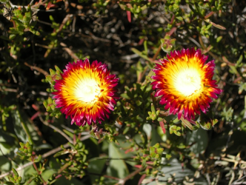 two bright flowers