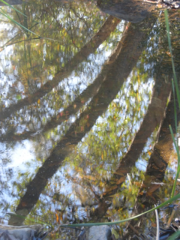 Pond reflections 2, Ojai, CA